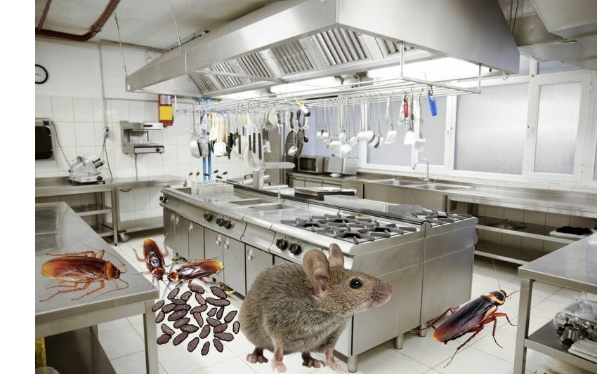 Roaches and Rodents in Local Italian Restaurant